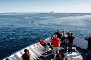 Krydstogt skibet Sea Endurance anløber Helsingør Helsingør