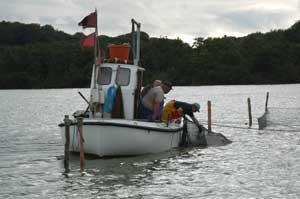 Erhvervsfiskeri Arresø