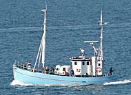 Havfiskeri Øresund Lystfiskerture Juventus M-S Helsingør Helsingør