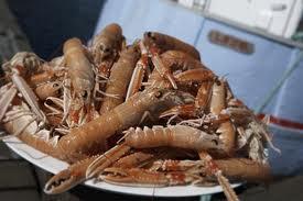 læsø / laesoe lobster