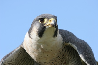 Falconergaarden Fredensborg